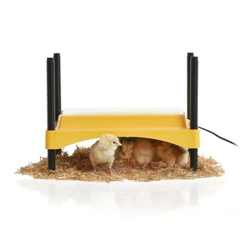 EcoGlow Safety 600 Chick Brooder